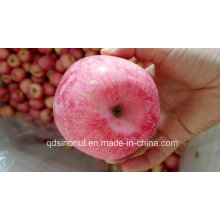 2015crop Chinese FUJI Apple (80-88-100)
