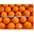 Jiangxi fresh Navel orange