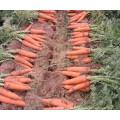 Zanahorias frescas / zanahorias frescas naturales de China