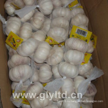 Нормальный белый чеснок с сетчатой сумкой (4,5 см и выше)