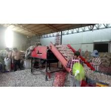 Fabrik liefern direkt erstklassigen frischen Knoblauch