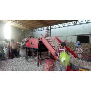 factory directly supply top grade fresh garlic