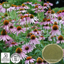 Polyphenol≥ 4.0%; Chicoric Acid≥ 2.0% Echinacea Purpurea Extract