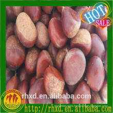 2016 New crop chestnut price/Chestnut from Thailand/The best South African Chestnuts Species--Organic Fresh Chestnut for sale
