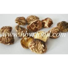 2-2.5cm fora da forma K Shiitake Mushroom