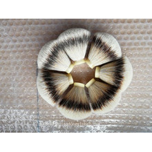 22 / 65mm Fan forme Silvertip Badger cheveux noeud