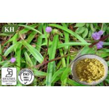 Haute qualité et compétitif Cyanotis Arachnoidea Extrait Beta ~ Ecdysone 10% ~ 98%;