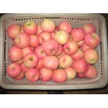 Fresh Fresh FUJI Apple From China