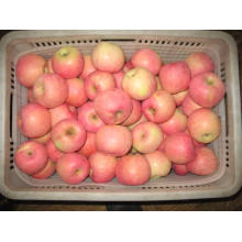Fresh Sweet FUJI Apple From China