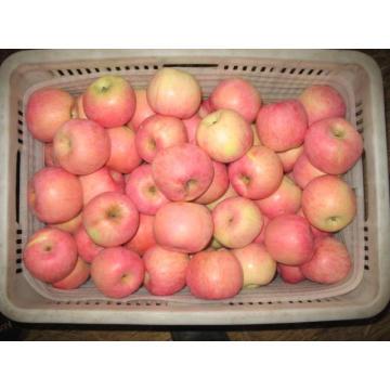 Fresh Sweet FUJI Apple From China