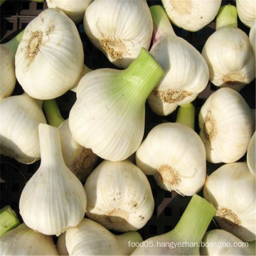 5-5.5cm Fresh Garlic Normal White Garlic