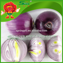 Wholesale Fresh Red early onion