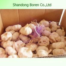Supply Original Fresh Garlic Dry Garlic