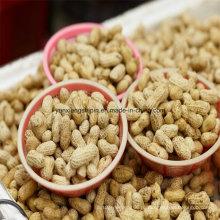 Жареный арахис в скорлупе, жареный арахис