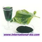 Copper Chlorophyll ( Oil-soluble chlorophyll)