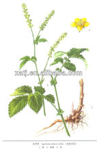 Hot sale Hairyvein Agrimonia Herb Extract