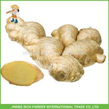 Légumes frais Gingembre chinois Gengibre frais 150g, 250g en haut