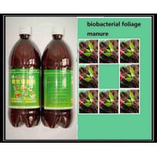 Seaweed extract Microbial foliar organic bio fertilizer