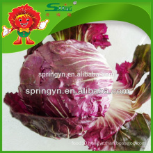 Fresh red round shape crystal romaine iceberg lettuce