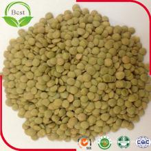 Lentilhas verdes chinesas de tamanho grande