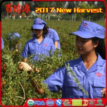 noms de tous les fruits secs 2017 nouveau goji berry organique nom de légumes de fruits rouges