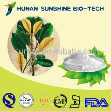 Eucommia Ulmoides Extracto de alta calidad en polvo 98% de ácido clorogénico pérdida de peso