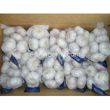 Pure White Garlic 5.5-6.0cm