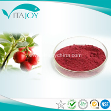 100% natural Organic Mulberry Fruit Extract/ Mulberry Extract powder