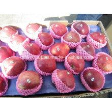 Neue Ernte Huaniu Apfel