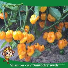 Suntoday hybride végétale F1 organique jusqu'à piment fort mariné jalapeno graines jaunes f1 piment hebanero graines légume (22020)
