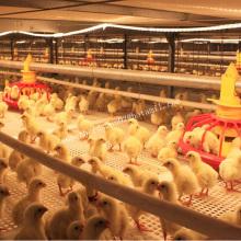 Cage à volaille automatique pour poulet à griller
