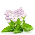 Mentas de stevia china dulces mentos mentas dulces dulces de menta