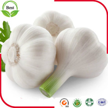 2016 Nouvelle récolte Fresh Normal White White White Garlic