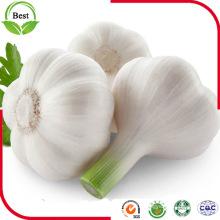 2016 New Crop Fresh Normal White White White Garlic