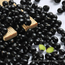 Black Beans with Green Kernel Origin in China