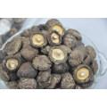 Nouveau champignon séché, légumes Xianggu Juncaoshii-Takee