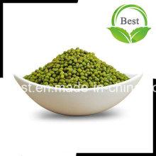 Venda Por Atacado Alta Qualidade Verde Mung Beans