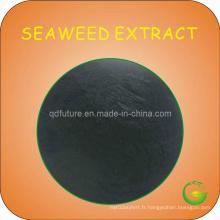 Poudre d'extrait d'algues marron
