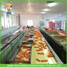 Nouvelle culture de jus de citron aux carottes fraîches