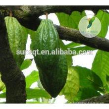 Produits d'amélioration du sexe Pénis élargissement de la poudre de cacao cru