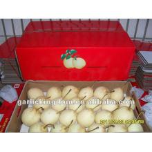 Fresh Ya pera / Nueva cosecha pera precio / China pera al por mayor