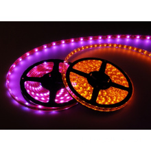 5050 RGBW / RGBWW / RGBCW LED Strip DC12V DC24V Disponibile