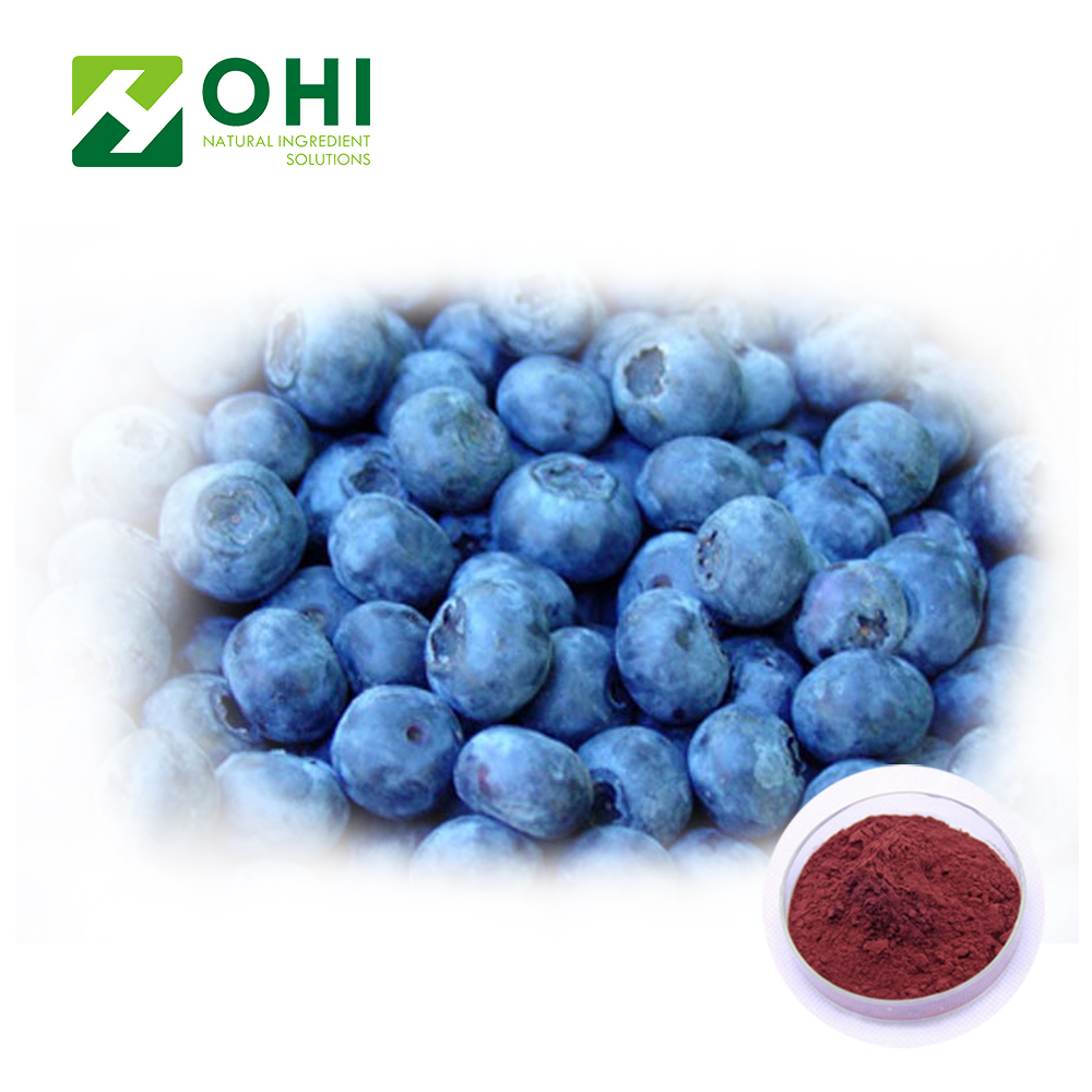 Serbuk ekstrak blueberry Anthocyanosides Anthocyanidin