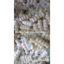 Pure White Knoblauch (5P / BAG)