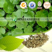 Pure Natural Jin Qian Cao Longhairy Antenoron Herb