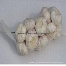 China New Colheita Fresh Garlic Small Bag Embalagem Atacado