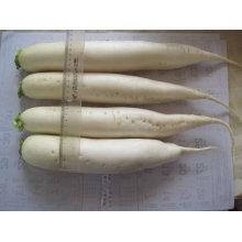 Rabanete branco chinês 400g