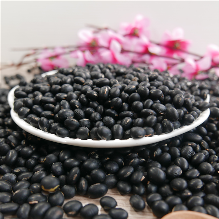 Hps Big Black Beans 6.5mm Tumbuh Alami