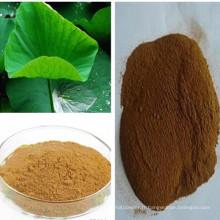 Perte de poids Nuciferine 2% Extrait de feuille de lotus