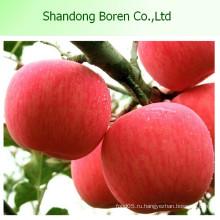 Свежие фрукты свежие FUJI Apple Fresh FUJI Apple